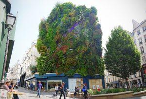 Paris Green wall