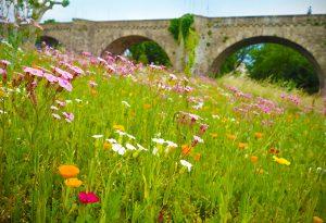 Pont Neuf, Carcassonne