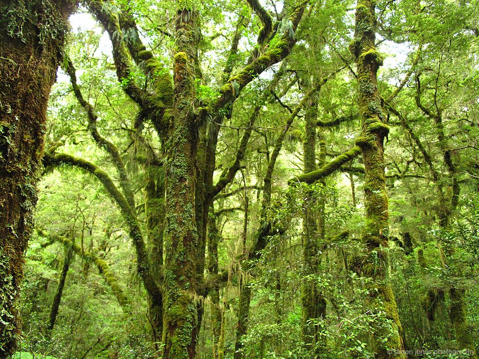 Moss Forest