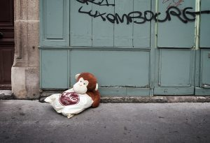 Homeless monkey